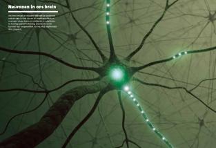 SS_H2_neuronen